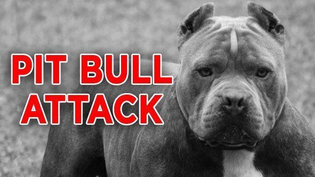 pit bull kills